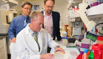 Frederic Zenhausern, seated, works with Dr. Kenneth Knox and Ting Wang, left, on research that combines their knowledge of engineering and medicine in a new model to study pulmonary diseases.